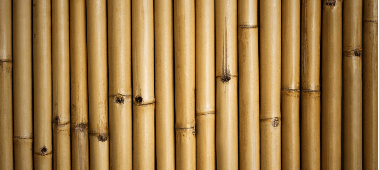 המדריך המלא לעץ הבמבוק